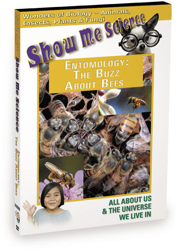 K4505 - Biology Entomology The Buzz About Bees